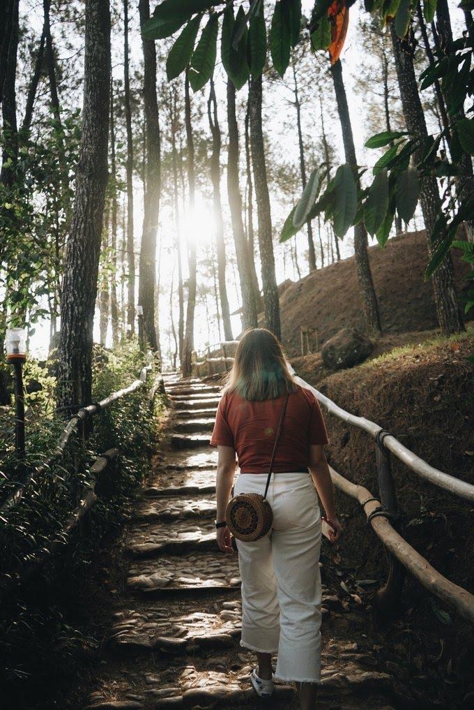 Hutan Pinus Pengger - Tempat Wisata di Jogja