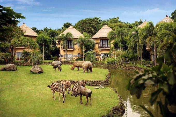 Mara River Safari Lodge Hotel Bali - Panorama